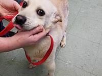 DINGO's story DINGO was left as a stray at a local