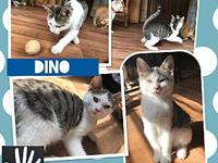 Dino's story Dino boy! This sweet and handsome little