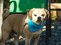 Dino's story Dino is a very sweet 7 year old boy whose