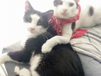 These two boys are the sweetest most outgoing cats you