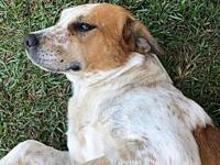 My story Dipper is a young adult hound mix from