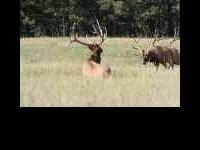 Hunt ID: CO-ElkDeerAntelope-All-Steamboat-Guided-Lou