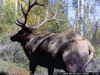 Hunt ID: CO-ElkMDeer-All-Glenwood-SM-Tim Hunt Deer, Elk
