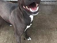 Dita's story Dita is a 1.5 year old spayed female who