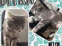 Ditka's story Little Ditka! This stunning and gorgeous