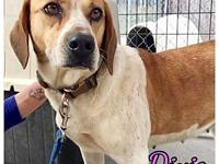 Dixie's story Hello my name is Dixie. I was at a kill