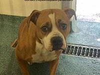 Dixie's story Logan County WV Dog pound ID SeptNoid11