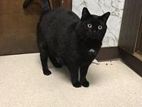 Dixie's story Dixie is a 5 year old, female spayed,