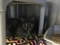 Dixie's story To meet this cat in person please stop by