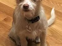 Dixie Doodle - Adopted!'s story ADOPTED! Our