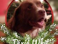 Dixie Whit's story Dixie Whit describes herself as more