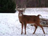 Premium Trophy Whitetail Deer with Lodging for less