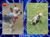 Dobby's story Dobby is an 8 year old fully vaccinated