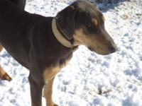 I have five full grown doberman pinchers. The mom and