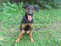 Doberman Pinscher - Molly - Large - Young - Female -