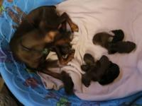 We have 3 males and 5 females available, the puppies