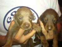 We have 8 puppies available all born on 10/31/2012.