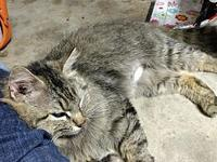 Doc Holliday's story From Campus Cats in Athens,