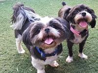 Doc & Pepper's story Adoption fee is $350 for the pair,