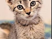 My story Doc..This little tabby kitten is as sweet as