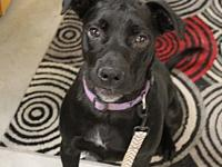Dodger's story Need a loyal and active companion to