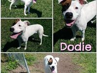 Dodie's story **Dodie is currently being fostered in