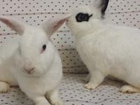 Meet Gus and Doe! This loving pair of buns sadly lost