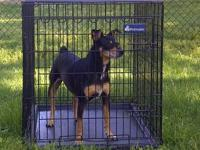 I have a black Petmate dog wire crate for sale. The