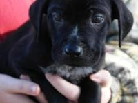Looking for a dog or young puppy? Planning to find a