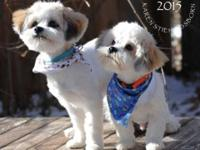 Searching for a pet dog or young puppy? Aiming to