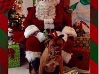 Dogue de Bordeaux - Roxy / Jacksonville, Fl - Large -