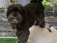 Doji's story Available to foster or adopt! Breed: Shih