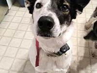 My story My name is Dollie! I am a Border Collie/Heeler