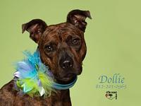 "Dollie's story ...""Dogs, for a reason that can only be"