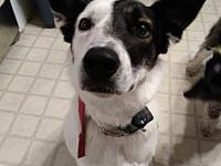 My story My name is Dollie, I am a Border Collie/Heeler
