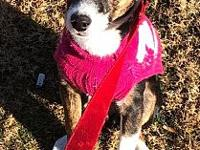 Dollie's story Dollie is a small breed mix of possibly