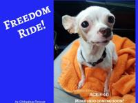 FREEDOM RIDE This tiny, porcelain white doll is fragile