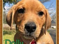 Dolly's story Dolly is a 9 week old lab/hound mix