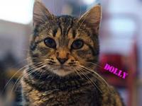 Dolly's story Dolly is a very loveable girl.  She