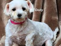 Dolly's story Please contact Constance