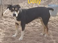 Dolly's story Dolly is a very sweet spayed two year old