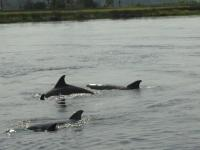 Enjoy the wetlands, coastal marshes, birds, dolphins,