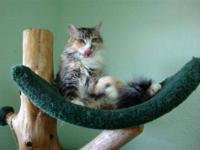 Domestic Medium Hair - 114800 - Medium - Adult - Female
