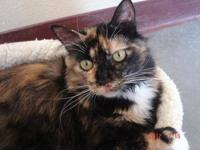 Domestic Medium Hair - Anita - Small - Young - Female -