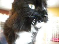 Domestic Medium Hair - Black and white - Buttons-