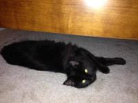 Domestic Medium Hair - Black - Jaden - Small - Young -