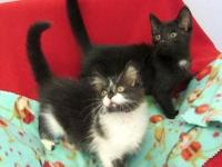 Domestic Medium Hair - Black - Trouble - Medium - Baby