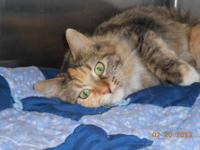 Domestic Medium Hair - Breezy - Medium - Adult - Female