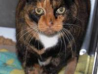 Domestic Medium Hair - Elizabeth - Medium - Senior -
