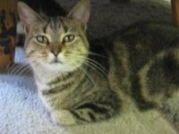 Domestic Medium Hair - Emma - Medium - Young - Female -